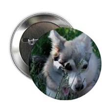 "Alaskan Klee Kai hiding in grass 2.25"" Button"