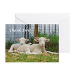 Thank You Cards ~ Buddy Lambs (Pk o