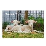 Thank You Cards ~ Buddy Lambs Postcards (Package o