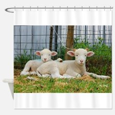 Buddy Lambs-Shower Curtain
