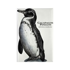 Galapagos Penguin Rectangle Magnet