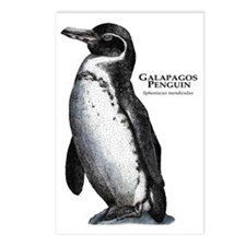 Galapagos Penguin Postcards (Package of 8)