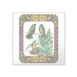 "Buff Bellied Hummingbirds Square Sticker 3"" x"