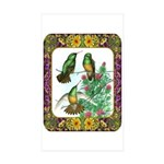 Buff Bellied Hummingbirds Sticker (Rectangle 50 pk