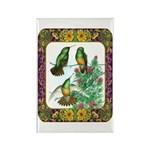 Buff Bellied Hummingbirds Rectangle Magnet