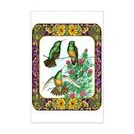 Buff Bellied Hummingbirds Mini Poster Print