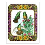 Buff Bellied Hummingbirds Small Poster