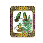 Buff Bellied Hummingbirds Postcards (Package of 8)