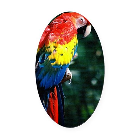 Scarlet Macaw showing his colors Oval Car Magnet