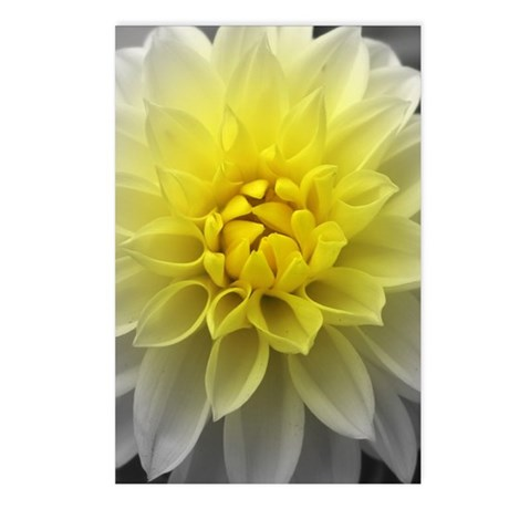 Yellow White Dahlia Postcards (Package of 8)