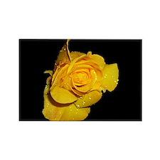 Yellow Rose Dew Drop Rectangle Magnet