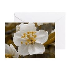 Antique Apple Blossom Greeting Cards (Pk of 10