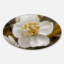 Antique Apple Blossom Oval Decal