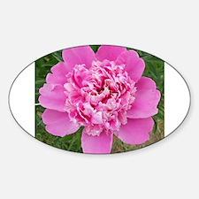 Pink Peonie Sticker (Oval)
