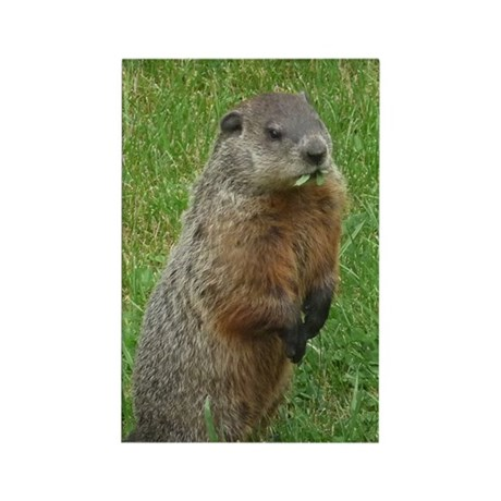 Woodchuck eating Rectangle Magnet