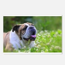 Nora Bulldog Postcards (Package of 8)
