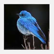 Mountain Blue Bird Tile Coaster