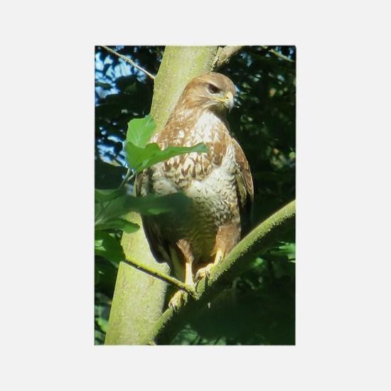 Cute Sparrowhawk Rectangle Magnet