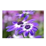 Purple and White Spring Flowers Postcards (Package