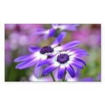 Purple and White Spring Flowers Sticker (Rectangle