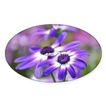 Purple and White Spring Flowers Sticker (Oval)