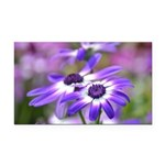 Purple and White Spring Flowers Rectangle Car Magn