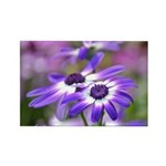Purple and White Spring Flowers Rectangle Magnet (