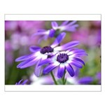 Purple and White Spring Flowers Small Poster