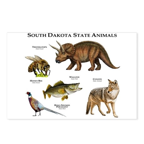 South Dakota State Animals Postcards (Package of 8
