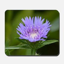 Purple Stokesia laevis - Mousepad