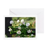 Romantic White Rose Greeting Cards (Pk of 10)