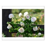 Romantic White Rose Small Poster