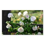 Romantic White Rose Sticker (Rectangle 50 pk)