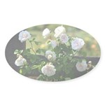 Romantic White Rose Sticker (Oval 10 pk)