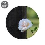 Romantic White Rose 3.5