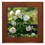 Romantic White Rose Framed Tile