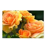Romantic Peach Roses Postcards (Package of 8)