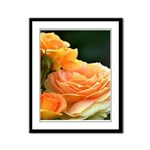 Romantic Peach Roses Framed Panel Print
