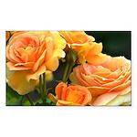 Romantic Peach Roses Sticker (Rectangle 50 pk)