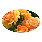 Romantic Peach Roses Sticker (Oval 10 pk)