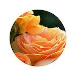 Romantic Peach Roses 3.5