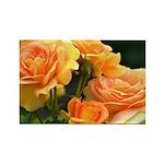 Romantic Peach Roses Rectangle Magnet (10 pack)