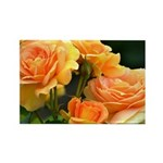 Romantic Peach Roses Rectangle Magnet
