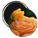 Romantic Peach Roses Magnet