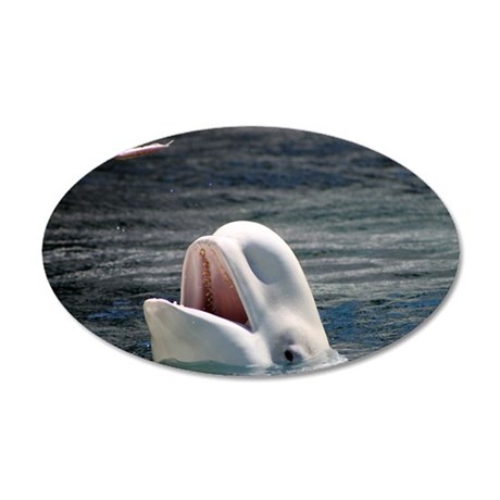 Beluga Whales 5 20x12 Oval Wall Decal