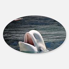 Beluga Whales 5 Decal