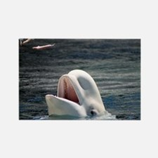 Beluga Whales 5 Rectangle Magnet