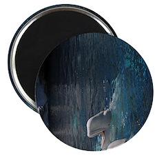 Beluga Whales.jpg Magnet