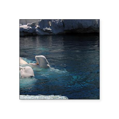 "Beluga Whales Square Sticker 3"" x 3"""
