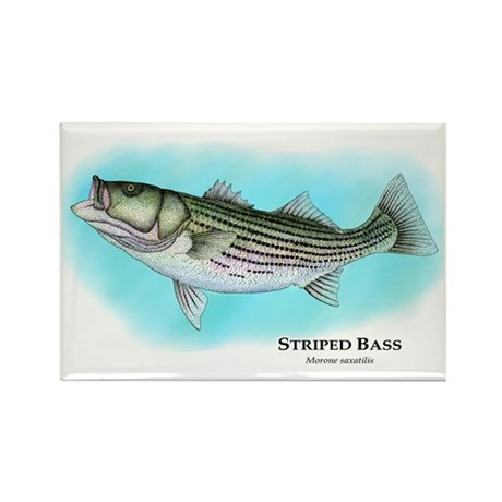 Striped Bass Rectangle Magnet